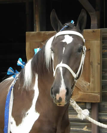 Rio, at MD State Fair 2011, as a yearling.